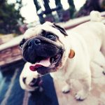 HTML Element Interpolation with Pug