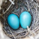Grouping and Nesting in CSS